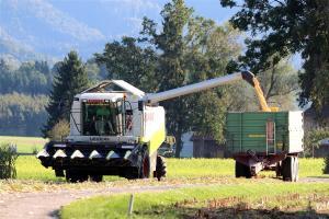Prețul grâului la Marea Neagră este în creștere