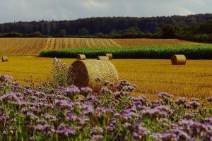 Prețul cerealelor încă se află sub presiunea vremii
