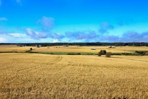 Prețul cerealelor europene continuă tendința ascendentă