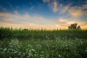 Prețurile cerealelor intră în consolidare