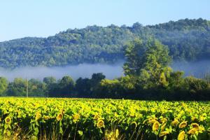Vremea adaugă incertitudine pe piața semințelor oleaginoase