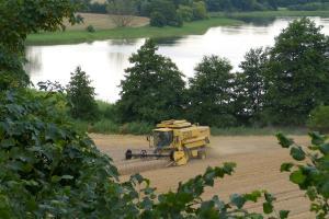 Prețurile europene la grâu continuă ascensiunea
