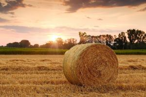 Prețul grâului la bursa Euronext încearcă o consolidare