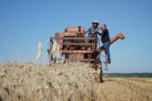 Prețul cerealelor devine ferm pe o piață dominată de condițiile meteo