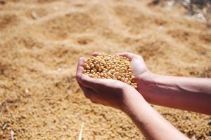 Exportul de soia și porumb din SUA către China a atins cote record