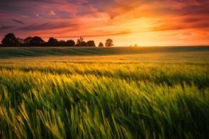Revenire în forță a contractelor futures pentru piața grâului