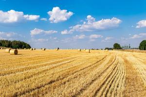 Prețurile grâului european sunt într-o formă excelentă