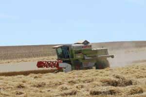 Prețul grâului susține celelalte cereale pe piață