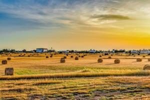 Prețurile cerealelor sunt în scădere la bursa CBOT