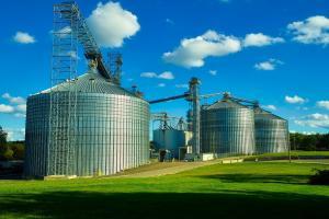 Cerealele furajere sunt căutate în licitațiile internaționale