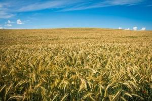 Mult așteptatul raport USDA a creat neîncredere pe piața cerealelor