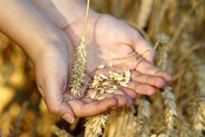 Cererea de grâu continuă să fie dinamică pe piața cerealelor