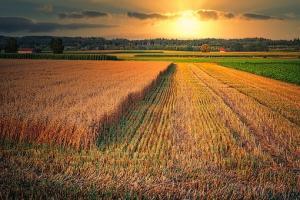 Scăderea prețului CBOT nu afectează piețele regionale a cerealelor