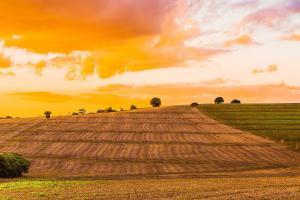 Brazilia inveștește în agricultură pentru creșterea productivității