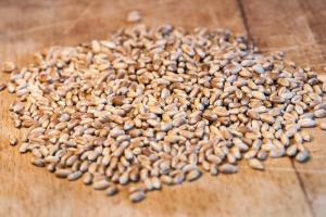 Recesiune pe piața cerealelor în așteptarea raportului Wasde
