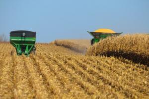 Cerealele europene sunt în roșu din cauza rapoartelor USDA și Coceral