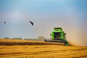Prețul grâului și porumbului european este în verde după raportul Wasde