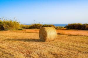 Prețurile cerealelor și semințelor oleaginoase sunt în creștere