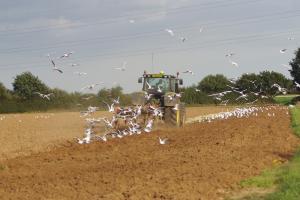 Contractele futures la grâu și porumb se consolidează
