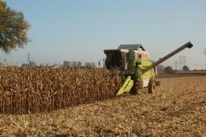 Prețul la grâu, porumb și rapiță se consolidează pe piața europeană