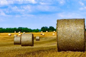 Prețul la grâu, porumb și oleaginoase este în declin pe toate piețele