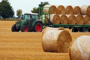 Revenire spectaculoasă a prețurilor la grâu, porumb și soia