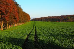 Prețul porumbului este susținut de progresul lent al recoltării