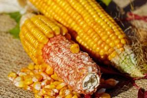 Piața cerealelor este susținută de creșterea prețului petrolului
