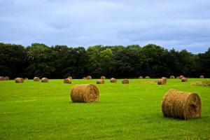 O nouă taxă introdusă de Rusia va afecta exportul de grâu al țării