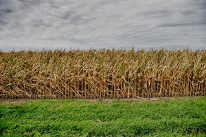 Prețurile cerealelor în Europa păstrează tendința ascendentă