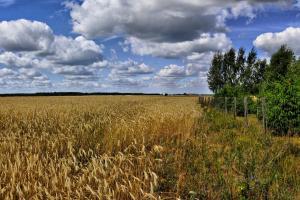 Prețurile cerealelor la Marea Neagră rămân ferme