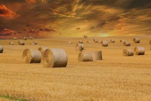 Prețurile grâului european încearcă o consolidare