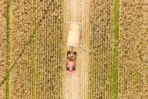 Piața cerealelor este în așteptarea noilor estimări ale USDA