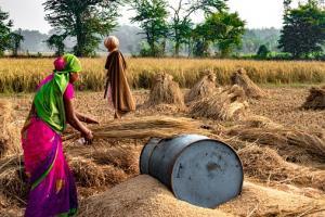 India preconizează o producție record de grâu