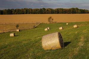 Prețurile cerealelor sunt în recuperare după raportul USDA
