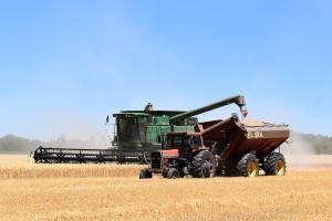 Turcia revine pe piață pentru a achiziționa grâu de panificație