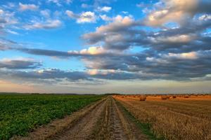 Piața energiei afectează prețul cerealelor în Europa