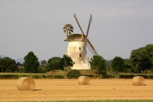 Record la producția de semințe de floarea soarelui în Europa