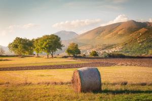 Prețul grâului crește pe piața europeană