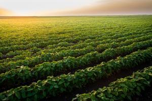 Importuri ridicate de soia pentru Uniunea Europeană