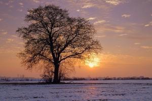 Iarna grea din America afectează tranzacțiile la grâu și porumb