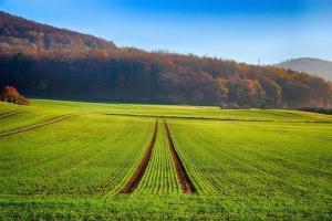 Cotații ridicate pentru contractele futures la grâu