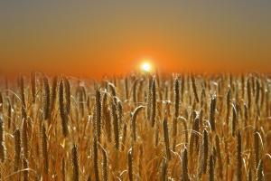 Taxa la export a Rusiei încă afectează contratele futures la grâu