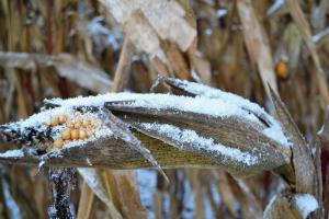 Producția de cereale din Rusia poate scădea semnificativ în 2021