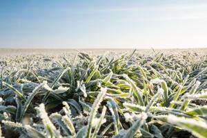 Vremea rece și schimbările climatice afectează piața agricolă