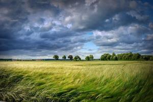 USDA estimează o scădere a producţiei de cereale a României
