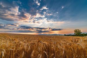 Rusia dublează impozitul pe exportul de grâu