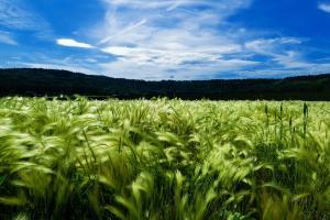 Instabilitatea contractelor futures va domina piața cerealelor