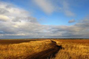 Producția agricolă a Rusiei și exportul de cereale